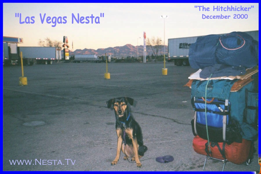 You Can Start Hitchhiking With Nesta Here!