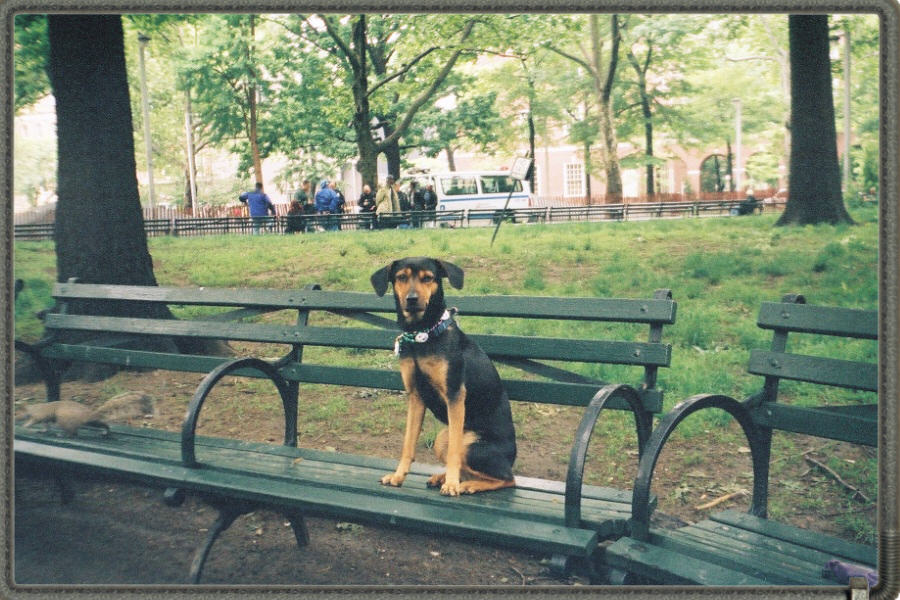 Nesta in Washington Square Park, May 2001.