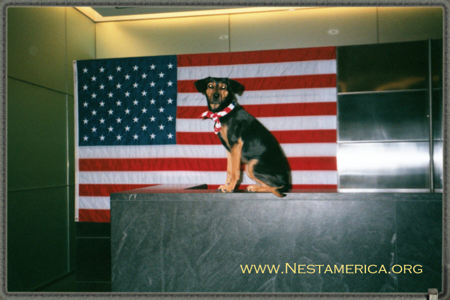 Patriotic Nesta in the lobby of 777 6th Avenue.